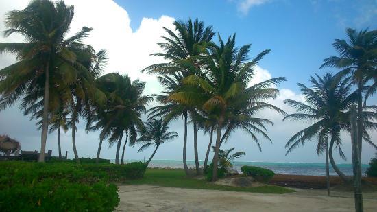 Costa de Cocos: Вид из домика.