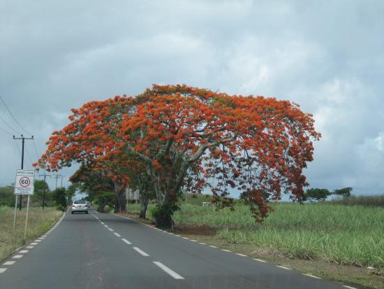 Taxi Mauritius - Private Tour: Mauritius - Sulla strada