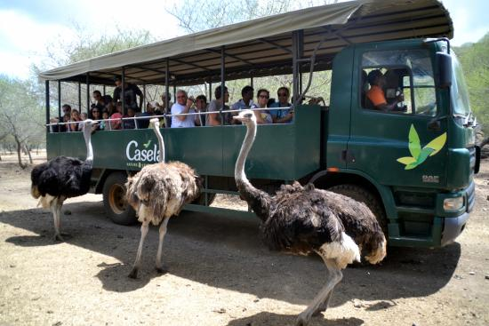 Casela World Of Adventures Safari