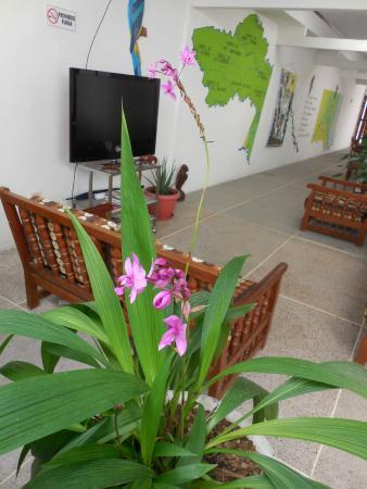 Casa Hotel Maune : open air garden near the lounge