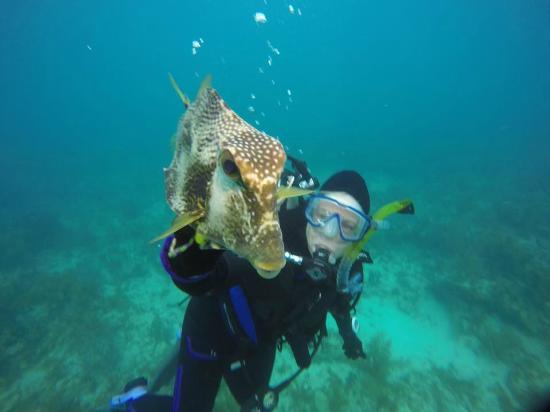 Seamonkey's Scuba Diving: Trunk Fish