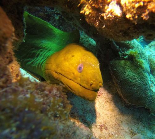 Seamonkey's Scuba Diving: Green Moray