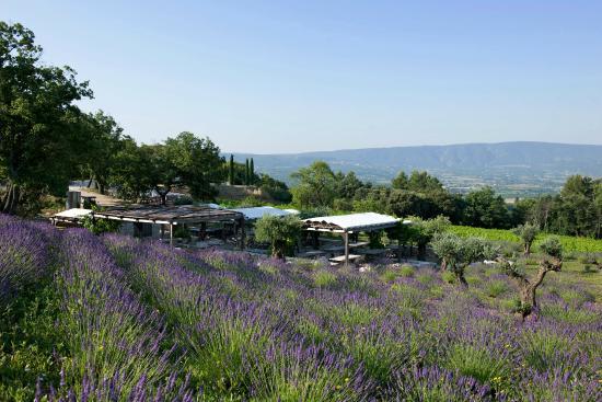 Coquillade Village: Jardin dans les vignes