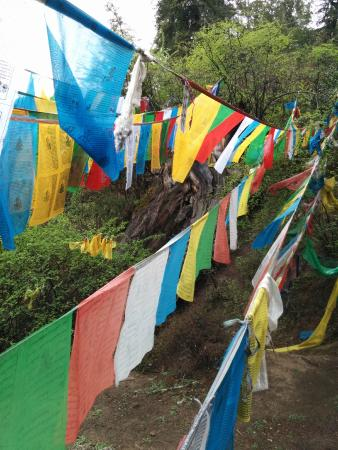 Giant Cypress Nature Reserve of Bajie, Nyingchi: Prayer flags in the wood