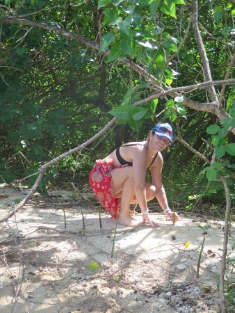 TI-Evasion Kayak de mer en Guadeloupe: on participe au reboisement de la mangrove