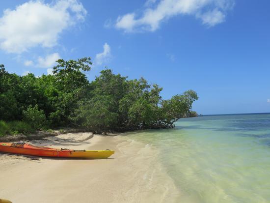 TI-Evasion Kayak de mer en Guadeloupe: Prendre soin des étoiles de mer