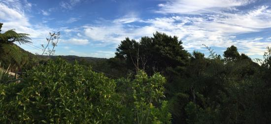 Lone Kauri Lodge: View from the lodge