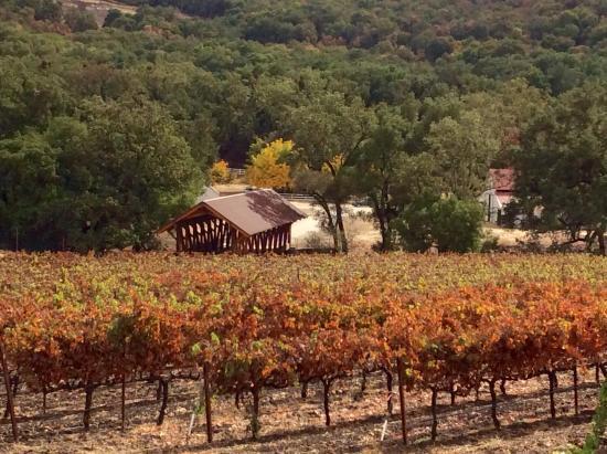 San Luis Obispo, Kaliforniya: Vineyard in Paso Robles