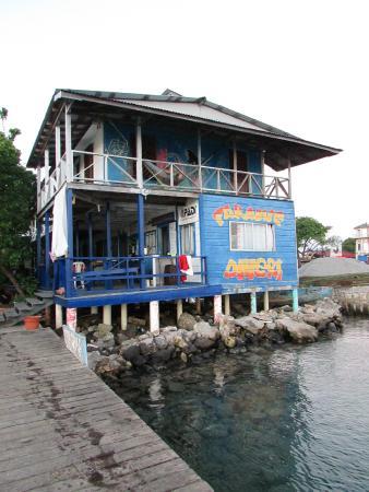 Utila, Honduras: Situados justo encima del mar