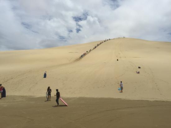 Cape Reinga Adventures Day Tours : The Dunes