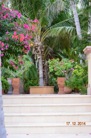 Villa del Faro : Details