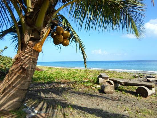 Spring garden bed and breakfast prices b b reviews jamaica port antonio tripadvisor for Spring garden jamaican restaurant