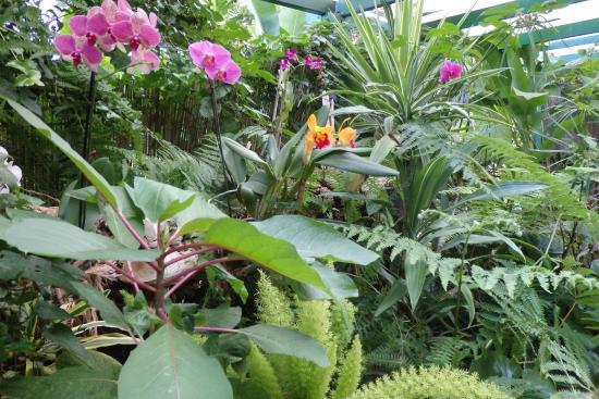 Orchids are on display this way picture of jardin de for Jardines de orquideas