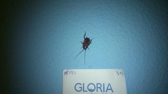 San Agustin, İspanya: Otra cucaracha mas en la pared del dormitorio.
