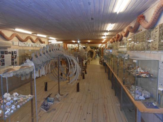 Muzeum Morza