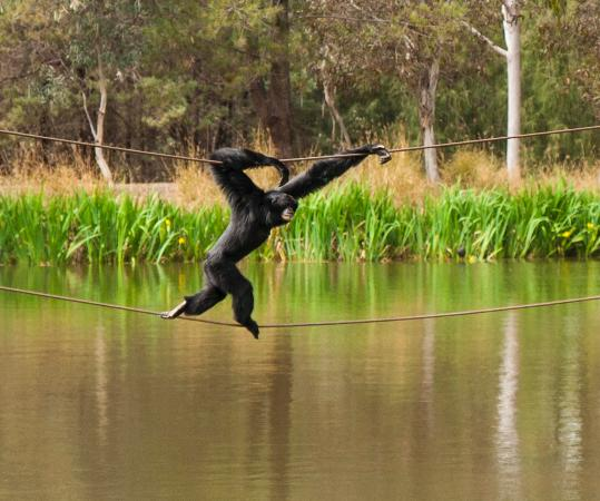 Dubbo, Australia: Gibbon run- to the Island