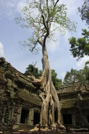 Angkor Thom Siem Reap Tour Guide