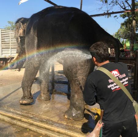 Acrobatics - Picture of Elephantstay, Ayutthaya - TripAdvisor