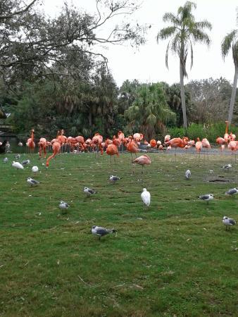 Bush Gardens Picture Of Busch Gardens Tampa Tampa