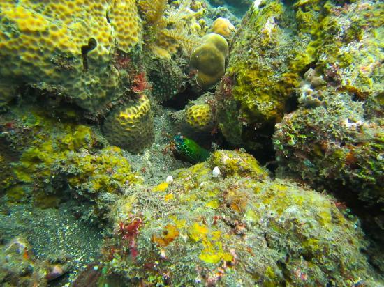 Bali Reef Divers: Mantis Shrimp