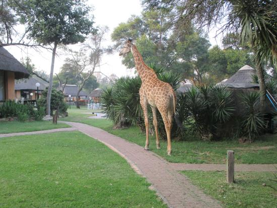 Heia Safari Ranch: op weg naar het ontbijt kom je haar tegen.