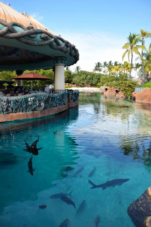 Lagoon Bar & Grill - Atlantis