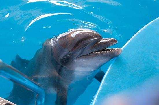 Lazarevskoye, Rusya: Сфотографироваться с дельфином стоит денег