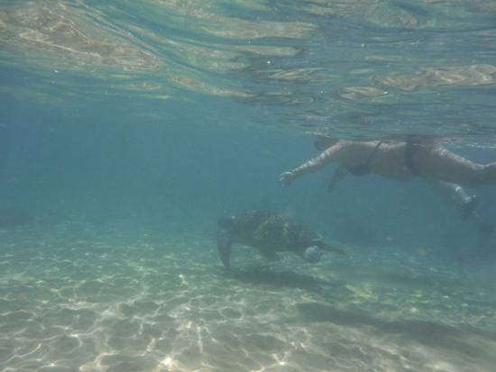 Coral Sanctuary: Turtle being chased