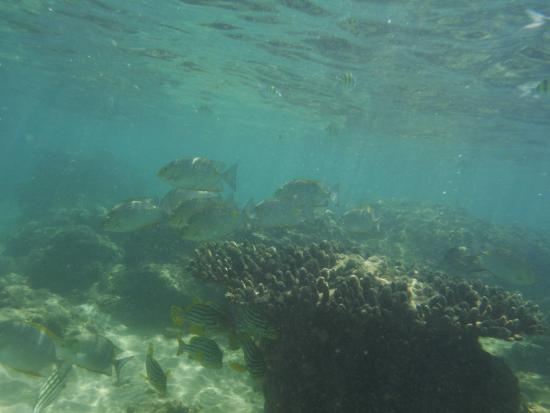 Coral Sanctuary: Shallow when the tight it out