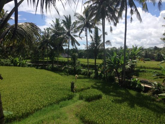 Toko-Toko : Utsikt från poolen