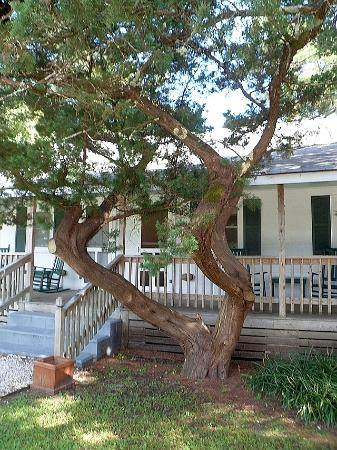 Edwards of Ocracoke: Another view of our bungalow @ Edwards!