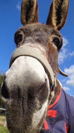 Corfu Donkey Rescue (Paleokastritsa, Griekenland ...