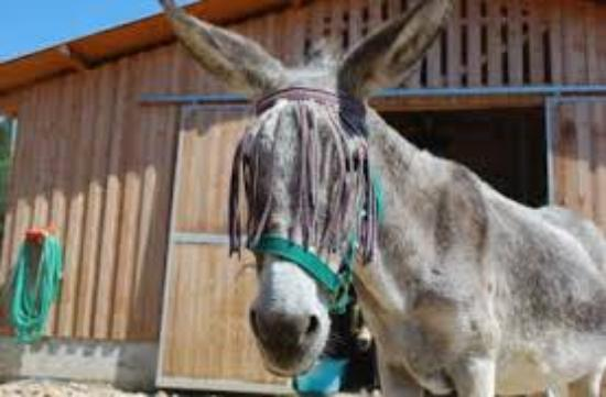 Corfu Donkey Rescue - Paleokastritsa - Aktuelle 2017 ...