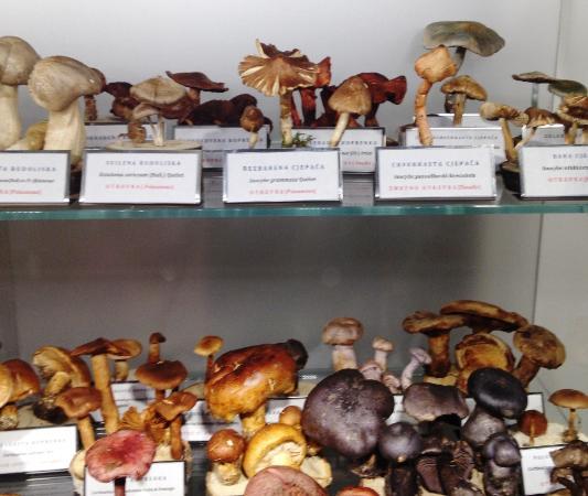 Mushroom Museum