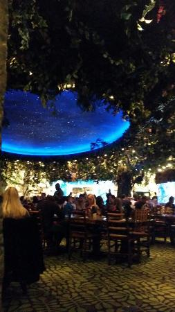 Rainforest Cafe : Main room