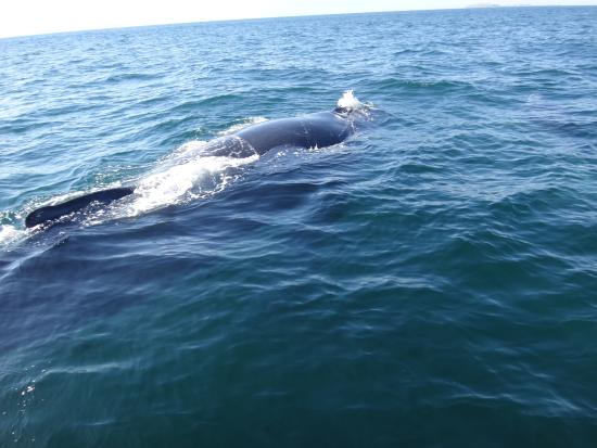 Whale Watching Photo Safari by Vallarta Adventures: Young whale