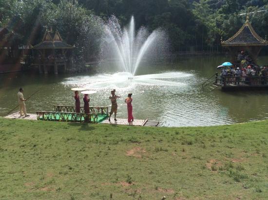 Peacock Garden, Sipsongpanna: show start