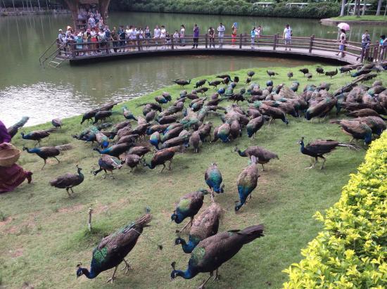Peacock Garden, Sipsongpanna