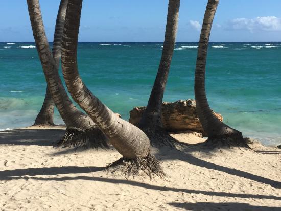 Iberostar Dominicana Hotel: plage du dominicana