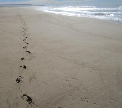 Oso Flaco Lake: Solitary Stretch of Sand