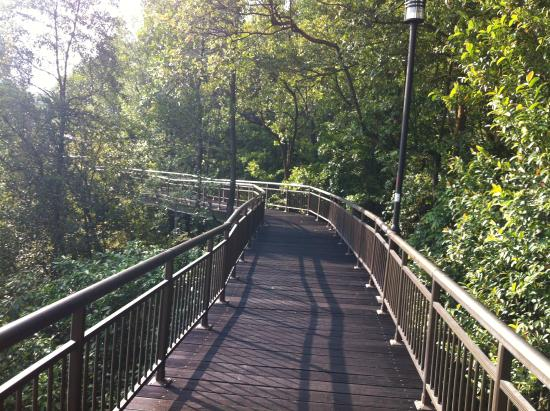 The Southern Ridges Canopy Walk in Kent Ridge Park & Canopy Walk in Kent Ridge Park - Picture of The Southern Ridges ...