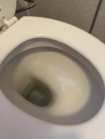 Whites Hotel: Greeted with a dirty stained toilet in our room