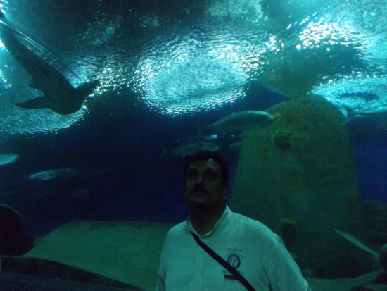 Underwater World Pattaya: under water world pattaya inside