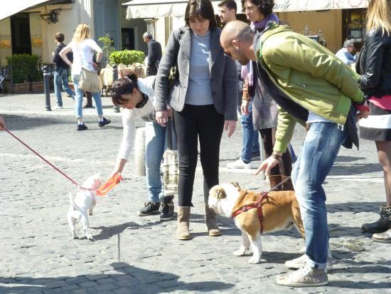 Rome As You Like It: Многие римляне гуляют по улицам с собаками
