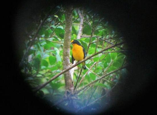 Canopy Lodge: wildlife around the property