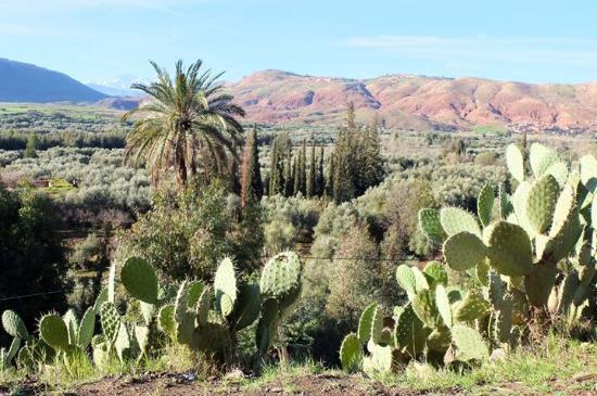 Morocco Trips 4 You : atlas mountains