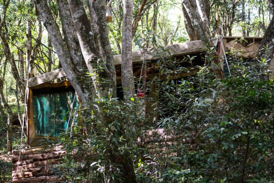 Nairobi Tented Camp: A view of a Tent Camouflaged in the Trees, From Just a Few Metres Away.