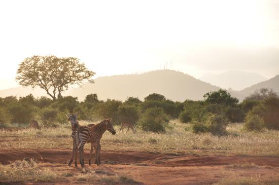 Marco Polo Safaris: small zebra