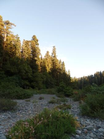 Jedediah Smith Campground : rivierbedding