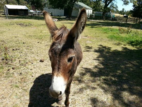 Stables Cafe & Bar: Donkeys in the paddock